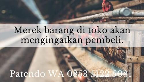 bisnis ayam petelur 2