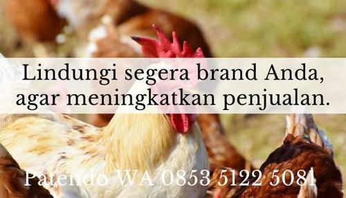 bisnis ayam petelur 4