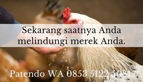 bisnis ayam petelur 6