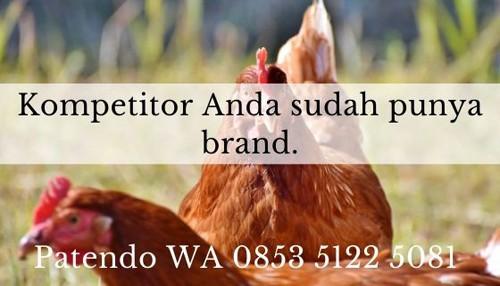 bisnis ayam petelur 7