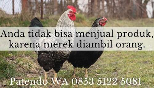 bisnis ayam potong2