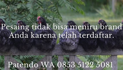 bisnis ayam potong3