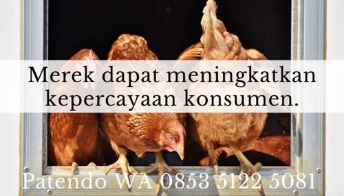 bisnis ayam potong5