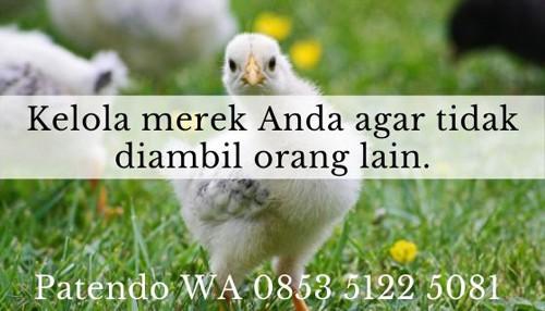 bisnis ayam potong6